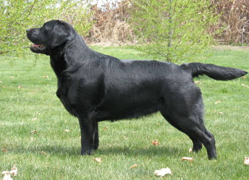 Blackthorn's High Felutin at 10 months